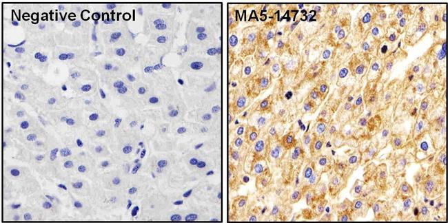 Apolipoprotein A1 Antibody (MA5-14732)