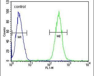 Brevican Antibody (PA5-25808) in Flow Cytometry