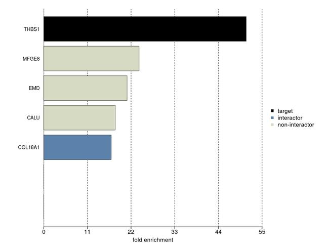 Thrombospondin 1 Monoclonal Antibody (A6.1)