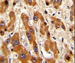 Bax Antibody (PA5-11378)