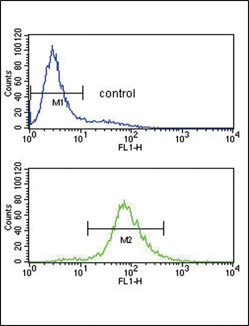 BCL6 Antibody (PA5-14259) in Flow Cytometry