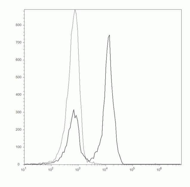 CD45R Antibody (C11206)