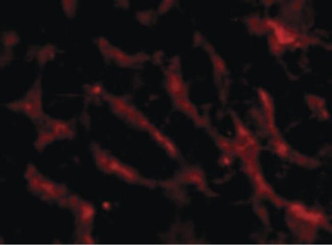 CD266 Antibody (PA5-20275)