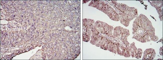 B7-H3 Antibody (MA5-15693)
