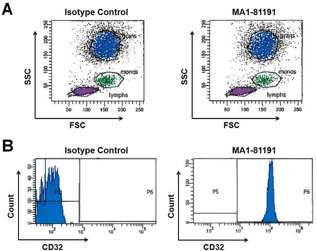 CD32 Antibody (MA1-81191)