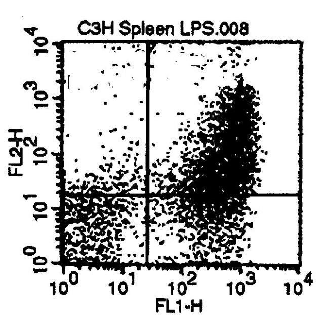 CD80 Antibody (MA1-70090) in Flow Cytometry