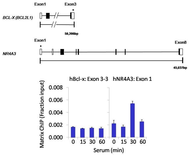 Cdc25C Antibody (MA5-14107) in ChIP assay
