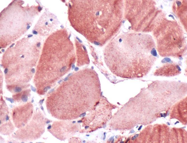 Claudin 10 Antibody (PA5-32351)