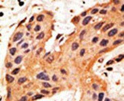 Connexin 50 Antibody (PA5-11644)
