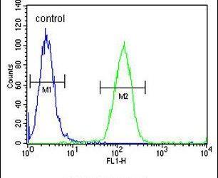 FOXC2 Antibody (PA5-24588) in Flow Cytometry