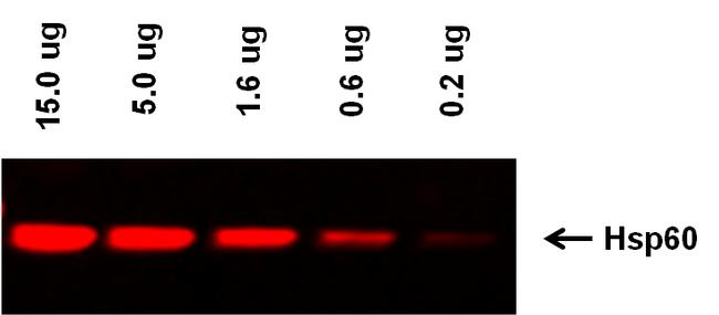 Goat anti-Mouse IgG (H+L) Highly Cross-Adsorbed Secondary Antibody, Alexa Fluor Plus 555