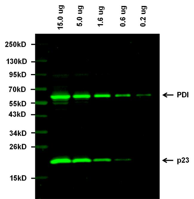 Goat anti-Mouse IgG (H+L) Highly Cross-Adsorbed Secondary Antibody, Alexa Fluor Plus 800