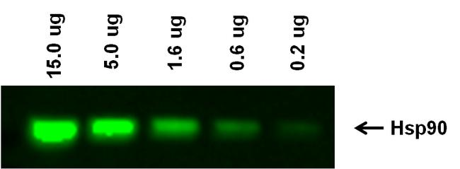 Goat anti-Rabbit IgG (H+L) Highly Cross-Adsorbed Secondary Antibody, Alexa Fluor Plus 488