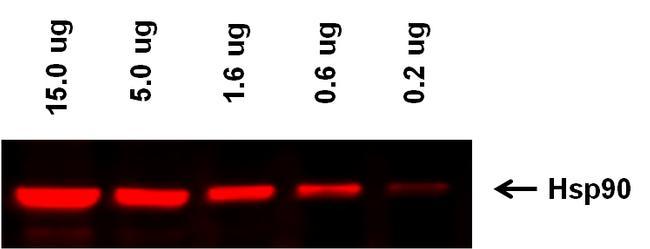 Goat anti-Rabbit IgG (H+L) Highly Cross-Adsorbed Secondary Antibody, Alexa Fluor Plus 647