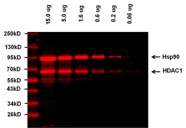 Goat anti-Rabbit IgG (H+L) Highly Cross-Adsorbed Secondary Antibody, Alexa Fluor Plus 680