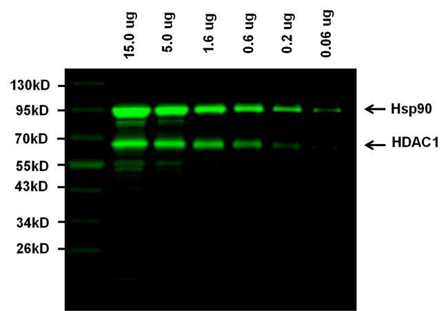 Goat anti-Rabbit IgG (H+L) Highly Cross-Adsorbed Secondary Antibody, Alexa Fluor Plus 800