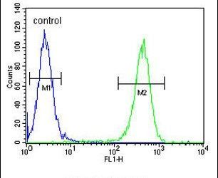 GFPT2 Antibody (PA5-26290) in Flow Cytometry