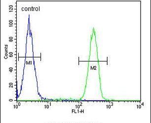 HLA-F Antibody (PA5-25273)