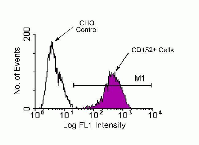 CTLA-4 Antibody (HMCD15201)