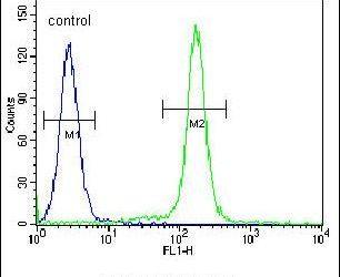 IDUA Antibody (PA5-25262)