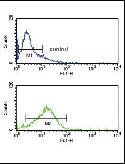 IRF8 Antibody (PA5-12441) in Flow Cytometry