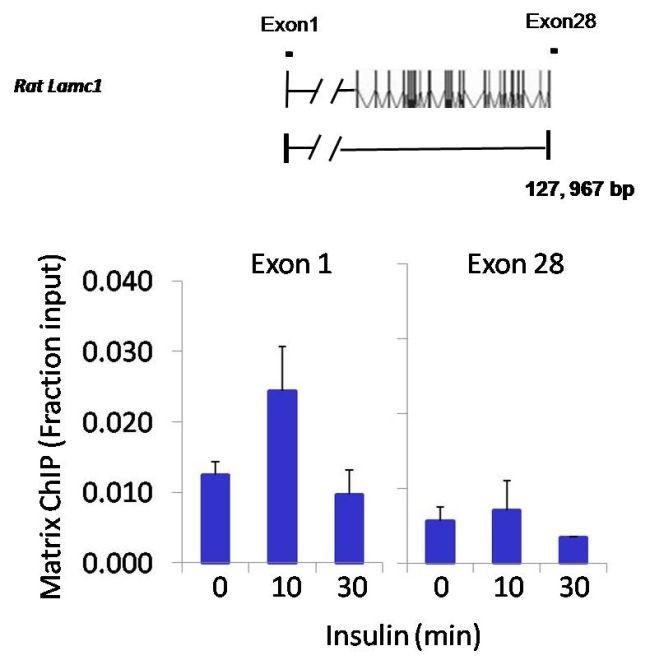 JunD Antibody (PA1-834) in ChIP assay