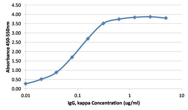 Human Kappa Light Chain Secondary Antibody (MA5-12117) in ELISA