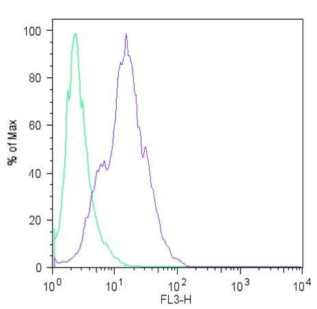 LIN28A Polyclonal Antibody