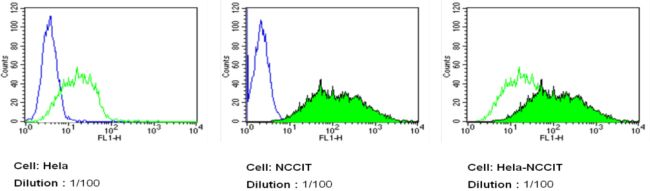 TRA-1-81 Antibody (MA1-024-D488) in Flow Cytometry
