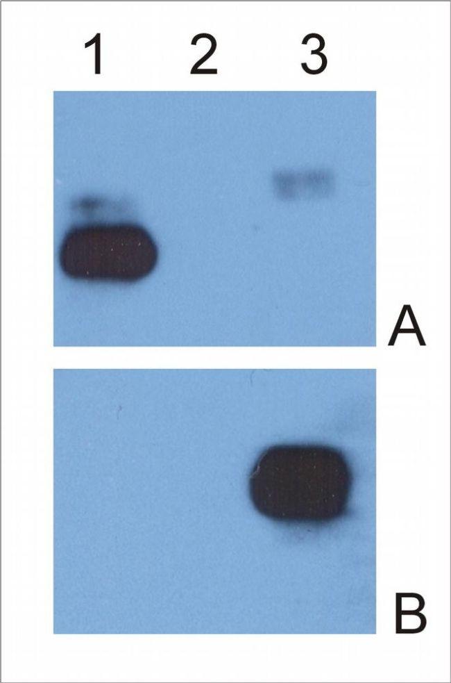 Human IgG Fc Secondary Antibody (MA1-10378)
