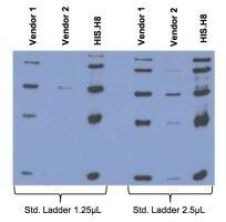 6x-His Tag Antibody (MA1-21315-BTIN) in Western Blot