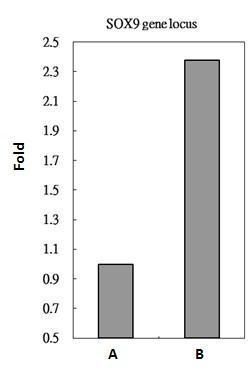 RbAp48 Antibody (MA1-23273) in ChIP assay