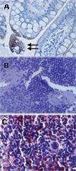 TLR3 Antibody (MA1-25649)