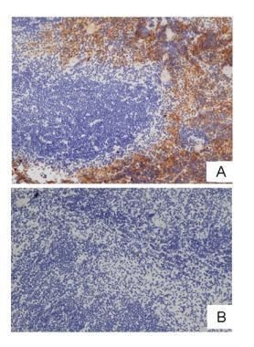 F4/80 Antibody (MA1-91124) in Flow Cytometry