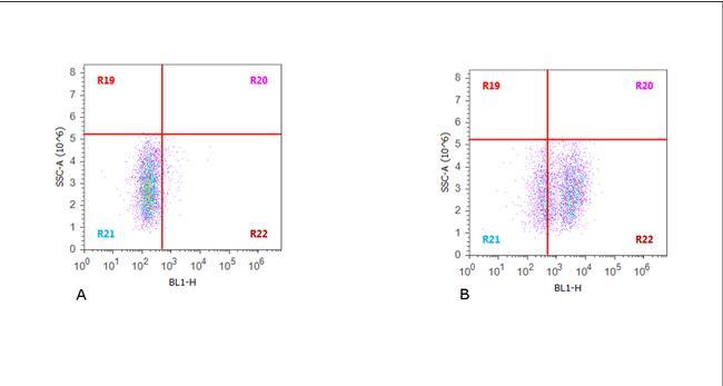 CD19 Antibody (MA1-10128) in Flow Cytometry