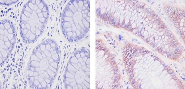 SOD1 Antibody (MA1-105) in Immunohistochemistry (Paraffin)