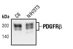 PDGFRB Antibody (MA5-15143) in Western Blot