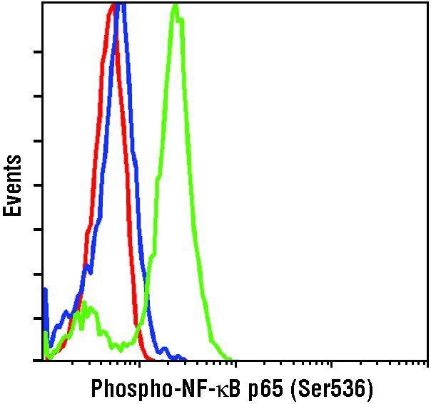 Phospho-NFkB p65 (Ser536) Antibody (MA5-15160) in Flow Cytometry