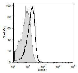Blimp-1 Antibody (MA5-16114)