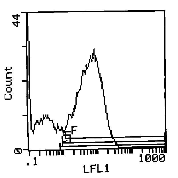 I-Ak Antibody (MA5-17772) in Flow Cytometry