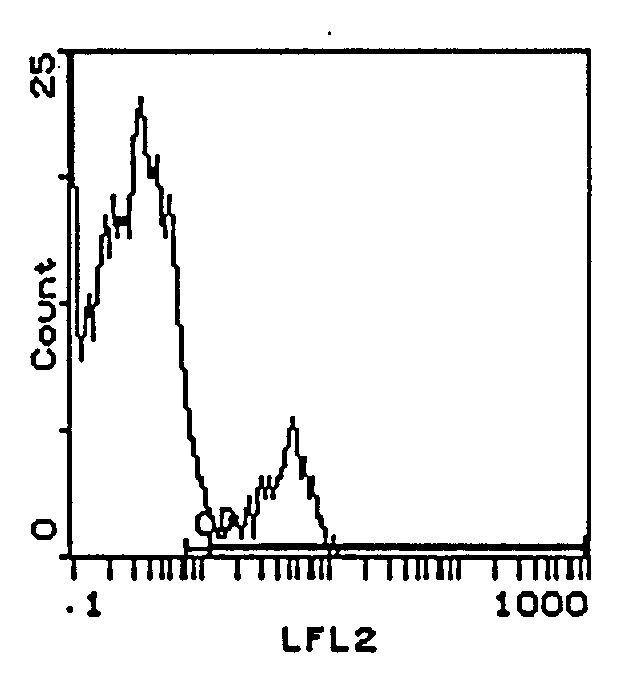 NK1.1 Antibody (MA5-17974)