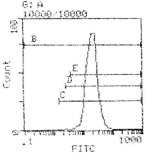 H-2Kb/H-2Db Antibody (MA5-17998) in Flow Cytometry