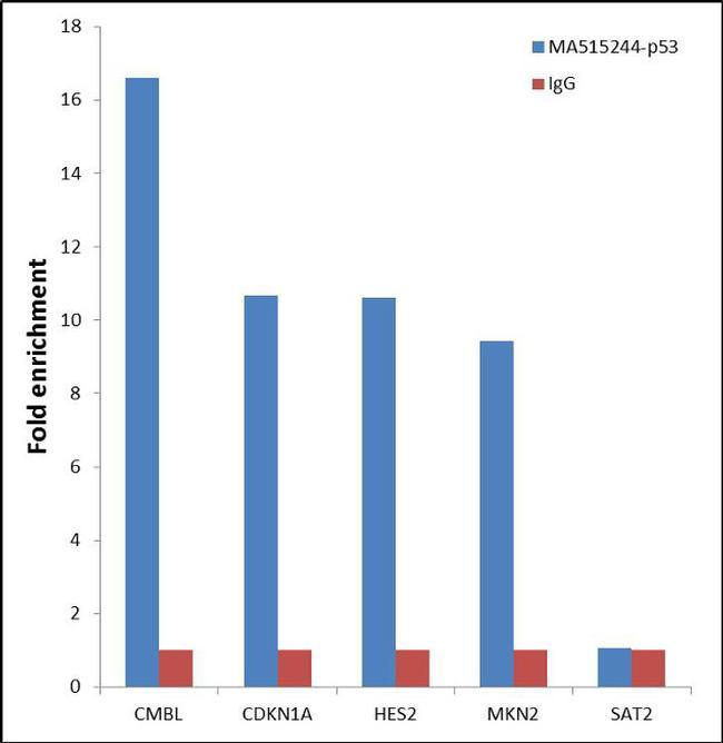 p53 Antibody (MA5-15244) in ChIP assay