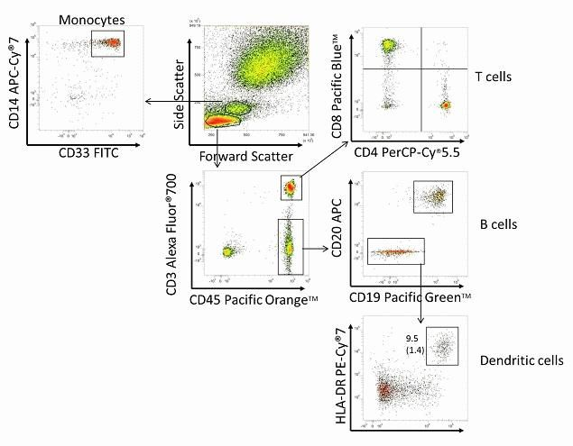 CD8 Antibody (MHCD0828) in Flow Cytometry