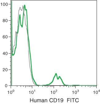 CD19 Antibody (MHCD1901-4)