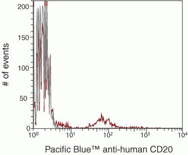 CD20 Antibody (MHCD2028)
