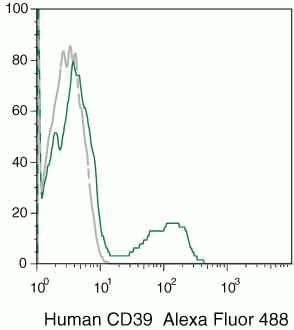 CD39 Antibody (MHCD3920)