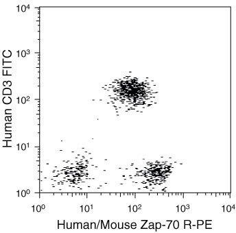 ZAP70 Antibody (MHZAP7004)