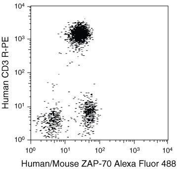 ZAP70 Antibody (MHZAP7020)