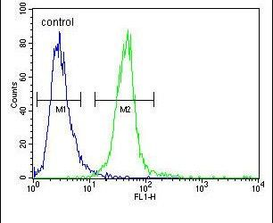 MYOZ1 Antibody (PA5-25172) in Flow Cytometry